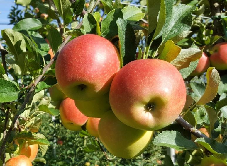 Obst01K.jpg